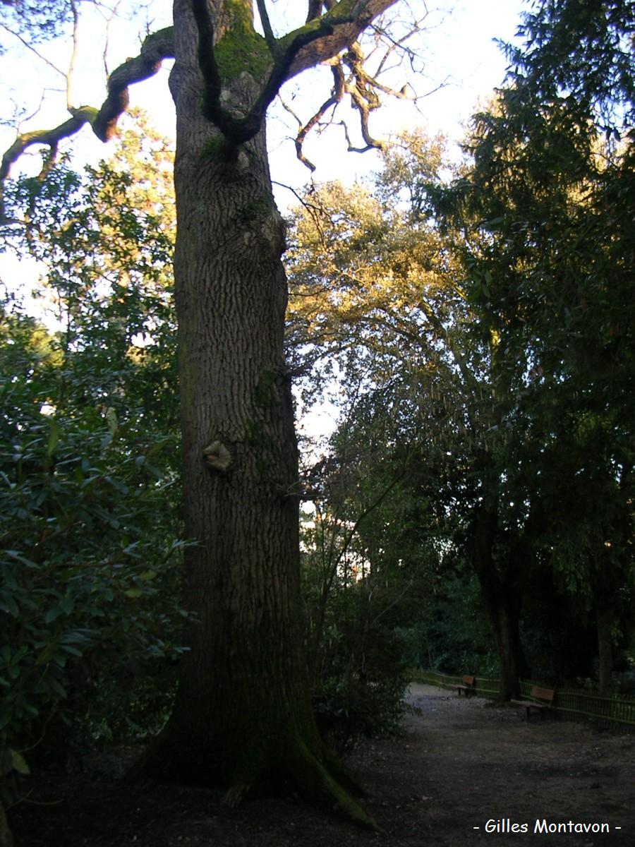 chne2 dans Chêne
